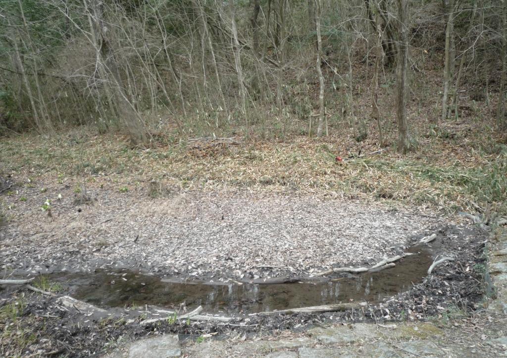 さんさくの路の池の全景(整備後)