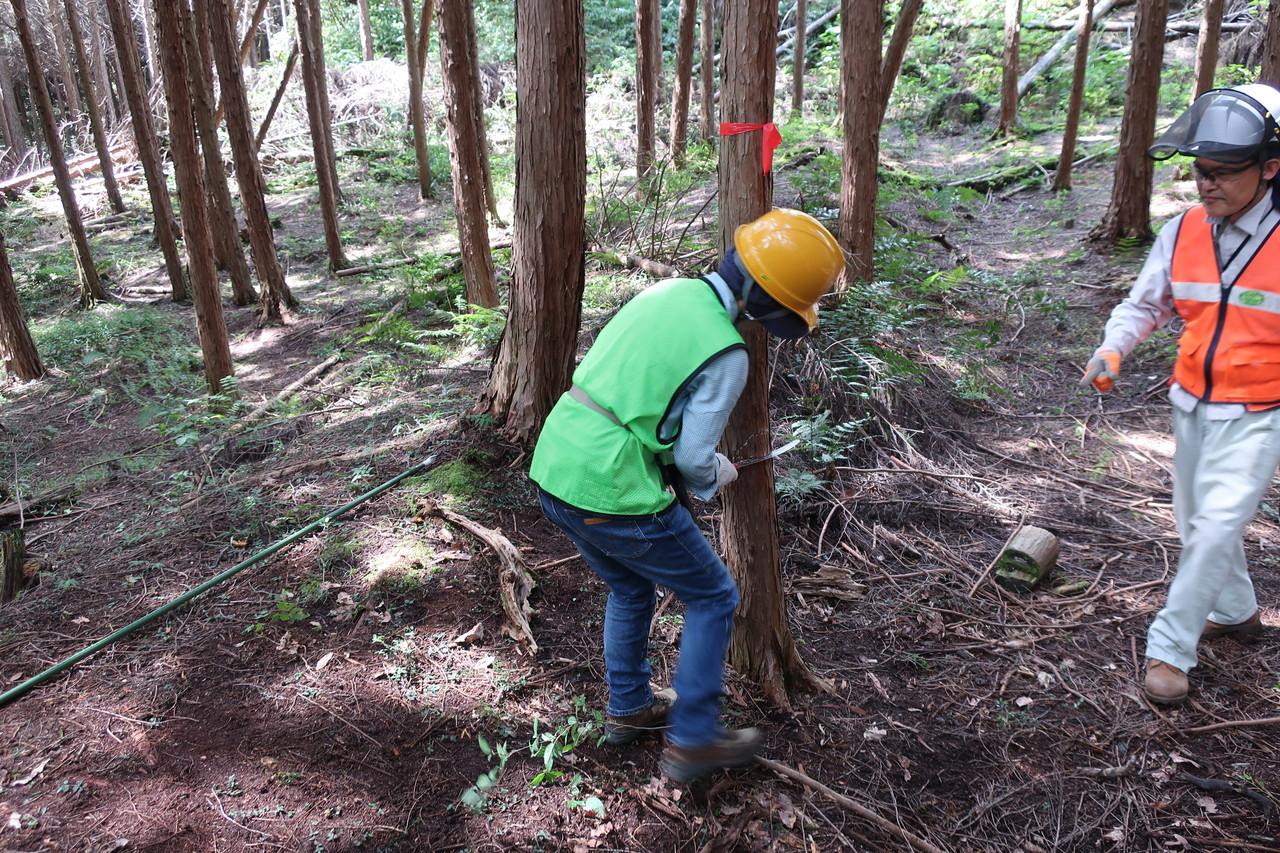 伐採体験 2