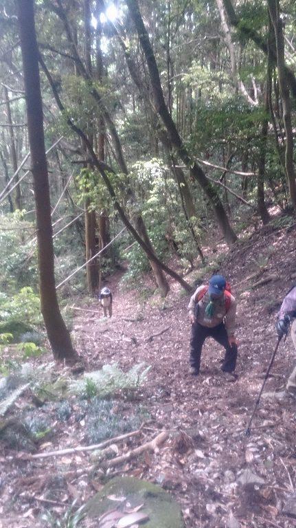 いざ山の中へ!引き続き傾斜がある道が続きます。