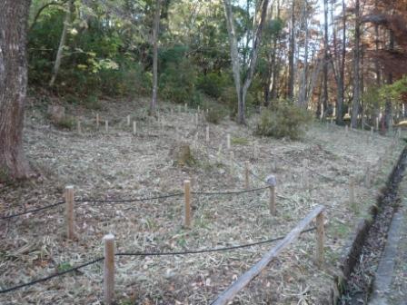カタクリの森ササ刈り後の処理