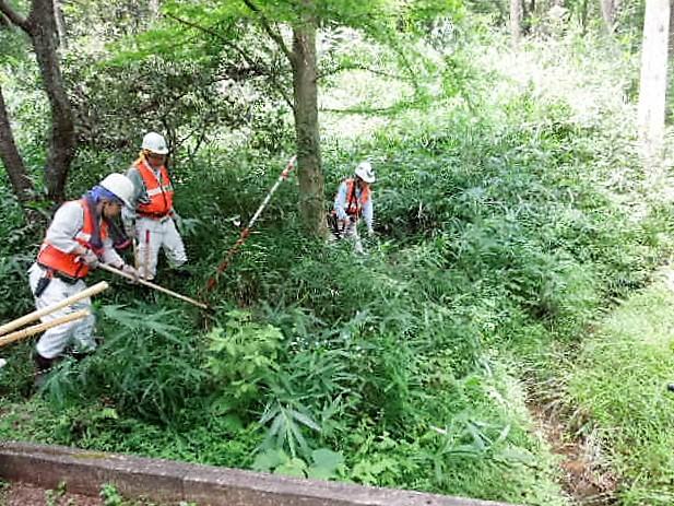 八つ橋湿地北側笹刈り実施前
