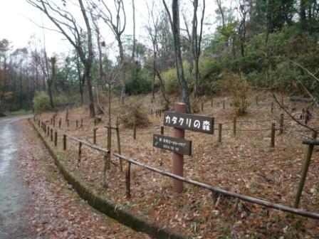 カタクリの森