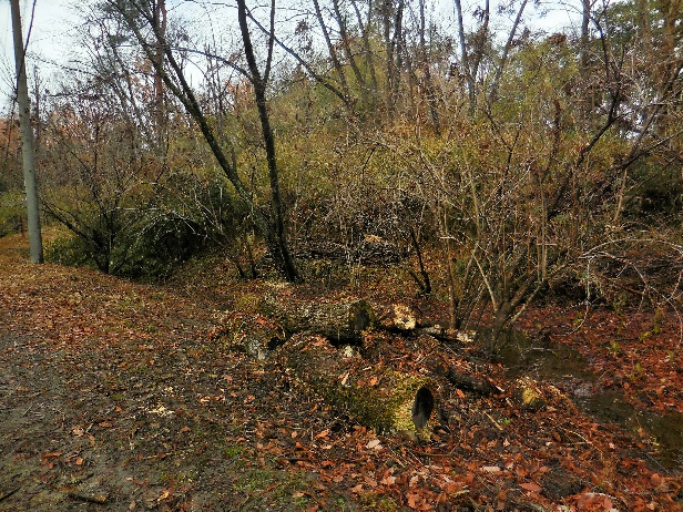 カタクリの森前管理道沿いの集積(整備後)