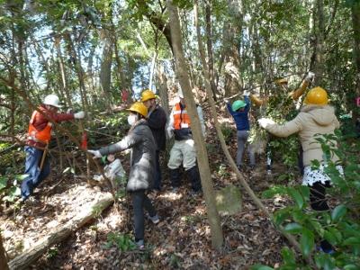 森に入って木(常緑樹)を切る体験