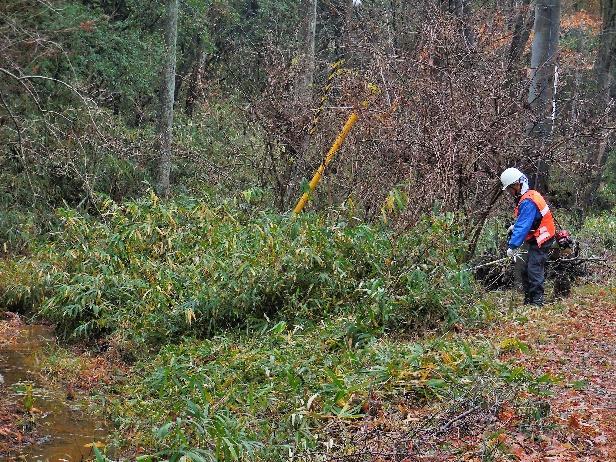 カタクリの森前管理道沿いの笹刈り