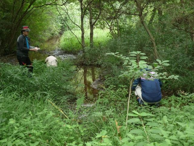 やすらぎの池の湿地に播種