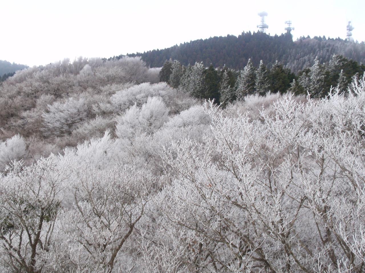展望台から見る樹氷