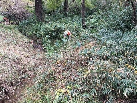 カタクリの森向かい側 作業前