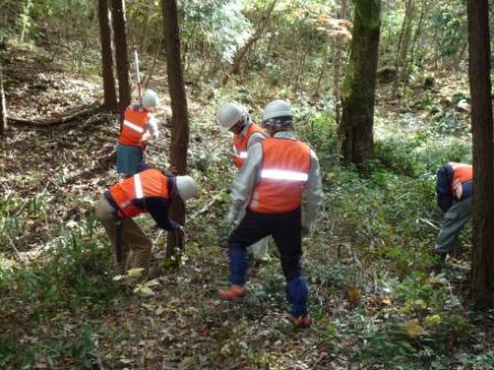 人工林でヒノキの伐採