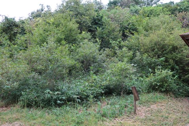 クヌギ植林地 作業前