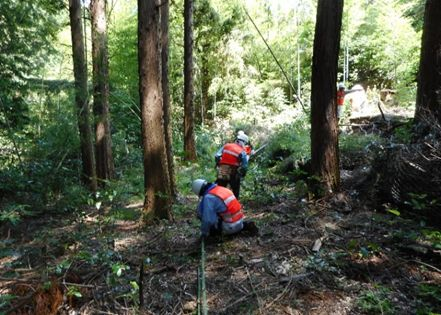 竹の切り出し作業