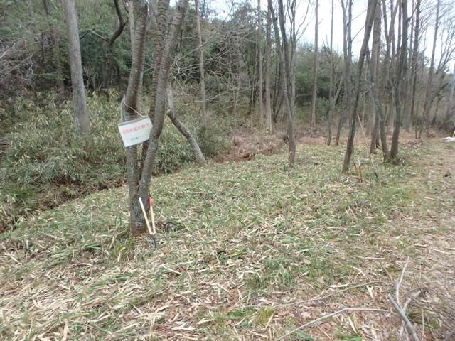 カタクリの森前の笹原の笹刈り後