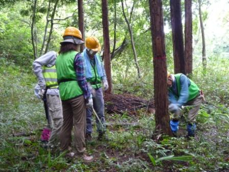 ヒノキ伐採