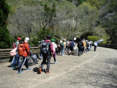 登山中(ヤマザクラがまだ咲いています)