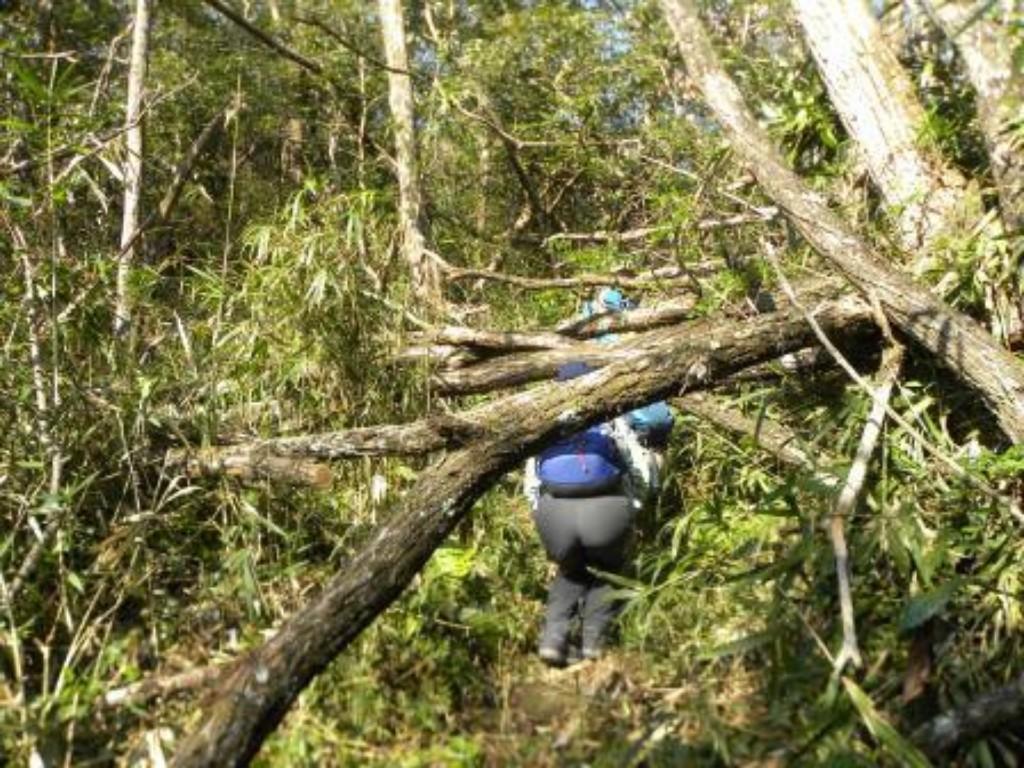 行く手を阻む倒木