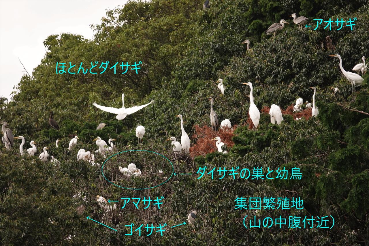 写真7a.集団繁殖地のようす(山の中腹)