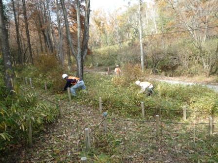 下草刈り作業中