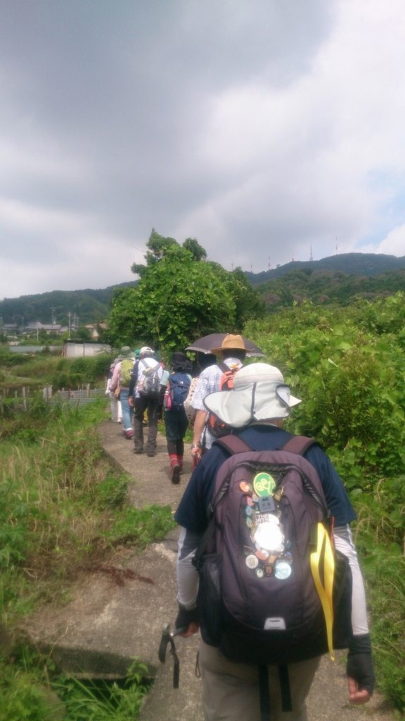 緑や畑の風景を眺めながら歩きます。