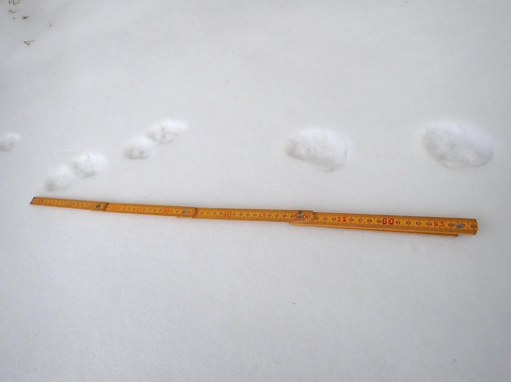 足跡 その4-1 これは何でしょう? 歩幅約15cm、足跡幅約5cm