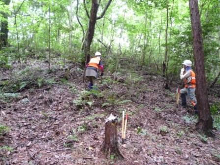 雑木の間伐