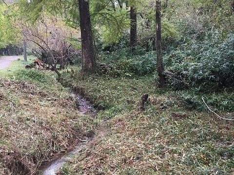 カタクリの森向かい側 作業後