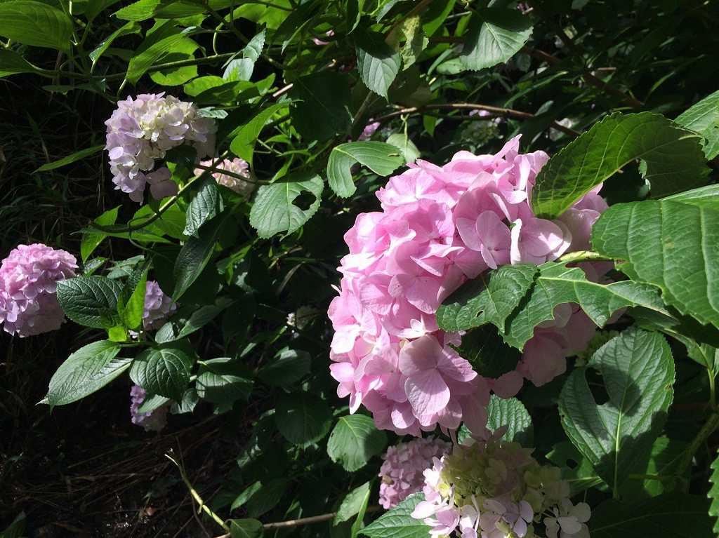 かわいいピンク色もありました。めずらしいですね。
