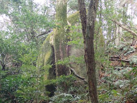 巨石が木を支えている