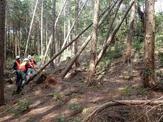 人工林で作業中1