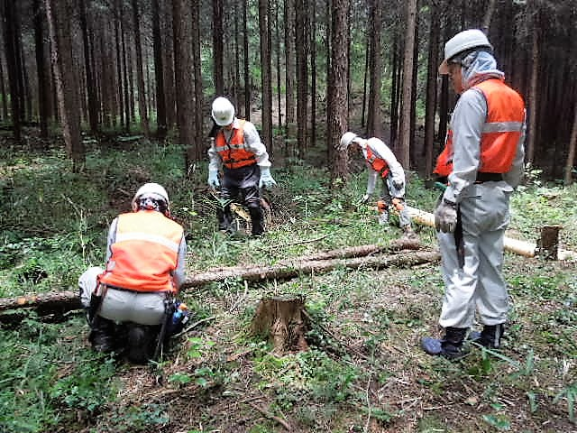 人工林内の倒木・枯枝集積整理