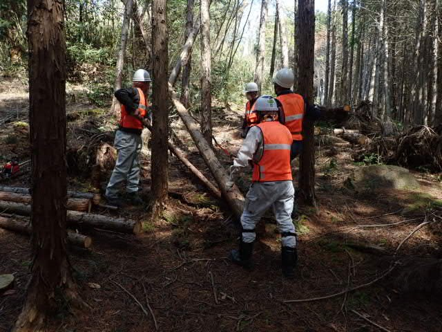 人工林で作業中2