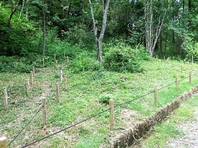 カタクリの森下草刈り実施後①