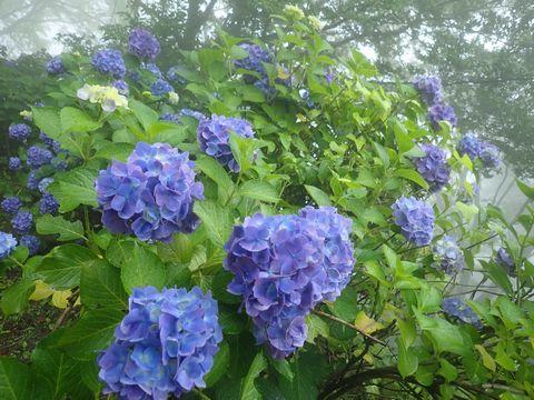 雨でイキイキと綺麗です