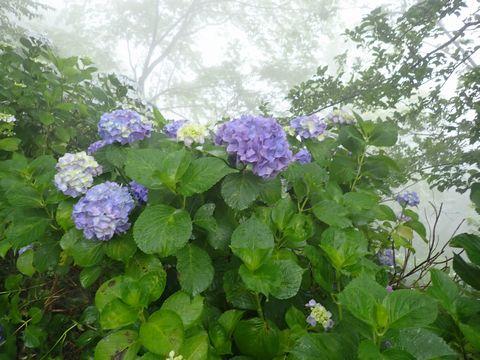 霧がかっていて神々しく見えますね