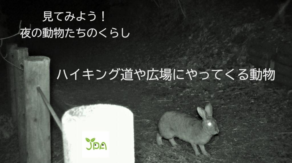 「ハイキング道や広場に現れた動物たちの動画」