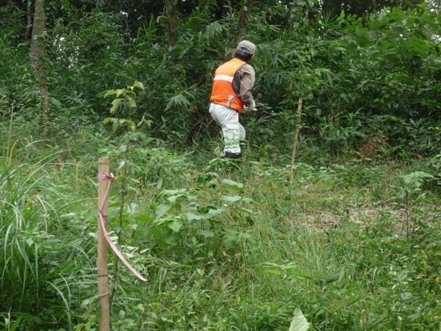 植樹地の下草刈り前