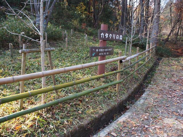 竹柵の設置後