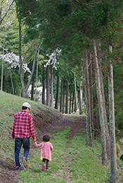 桜吹雪舞う、美しき里山へ