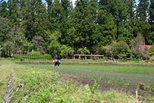 杜のと杜の間に時折覗く暮らしの佇まい。「美しい春の風景をありがとう」、手作業で田植えをするおばあちゃんへ
