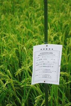 この辺りには生協と契約し、特別栽培米を育て、都市の消費者と交流している生産者も多いです