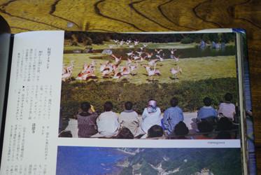 フラミンゴといえば・・・今はなき勝浦市の「行川アイランド」
