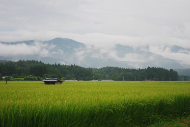 集落界隈の様子。田んぼの匂いを嗅ぐと、幼い頃ここで遊んだ記憶が蘇ってきます