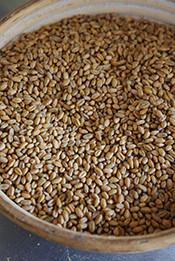 こちらは製粉前の玄麦