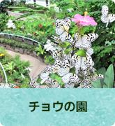 チョウの園