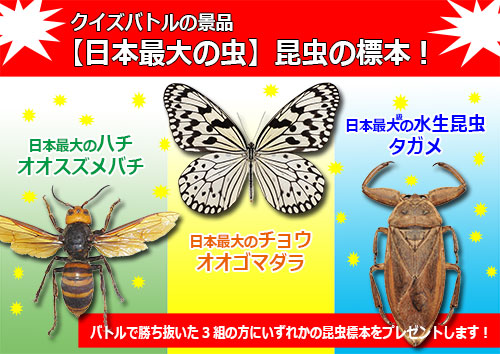 勝ち抜いた3組には日本最大級の虫の昆虫標本をプレゼント!