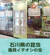 石川県の昆虫~職員イチオシの虫