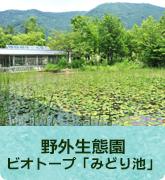 野外生態園~ビオトープ「みどり池」