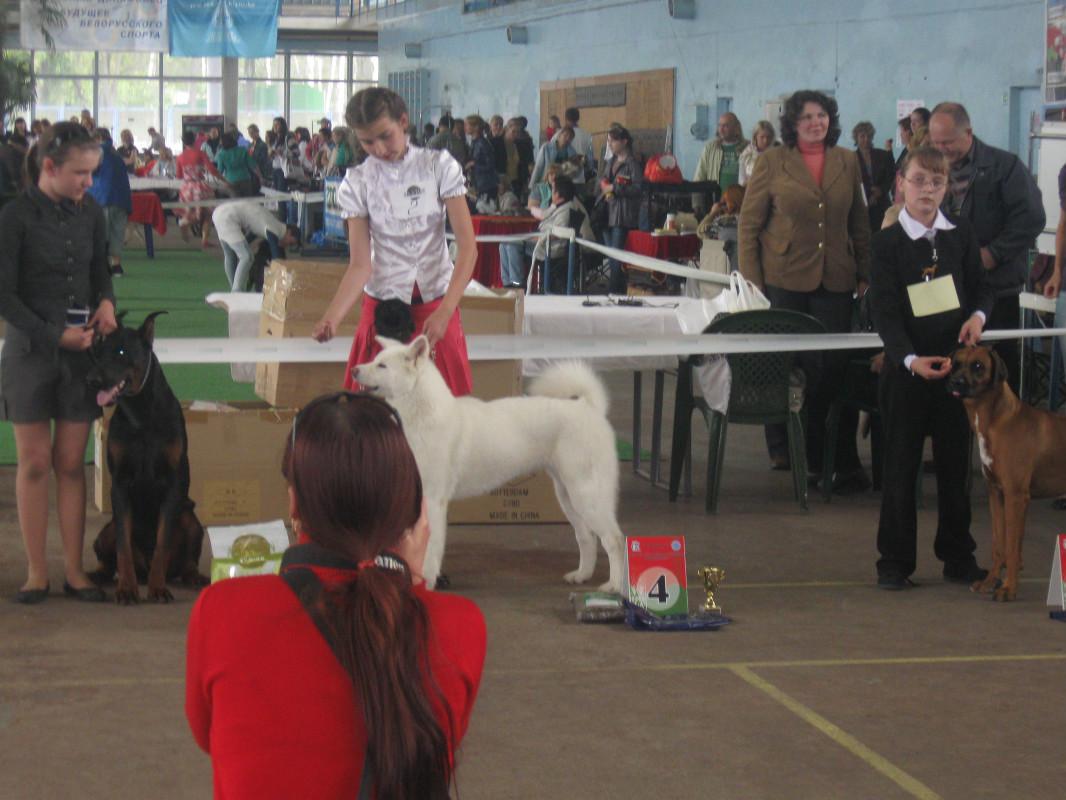 02-03.06.2012г.Международная выставка собак СACIB