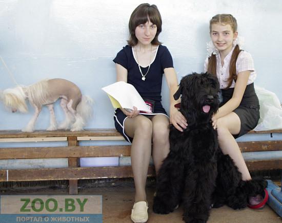 Международня выставка собак всех пород, г.Минск,4 июня