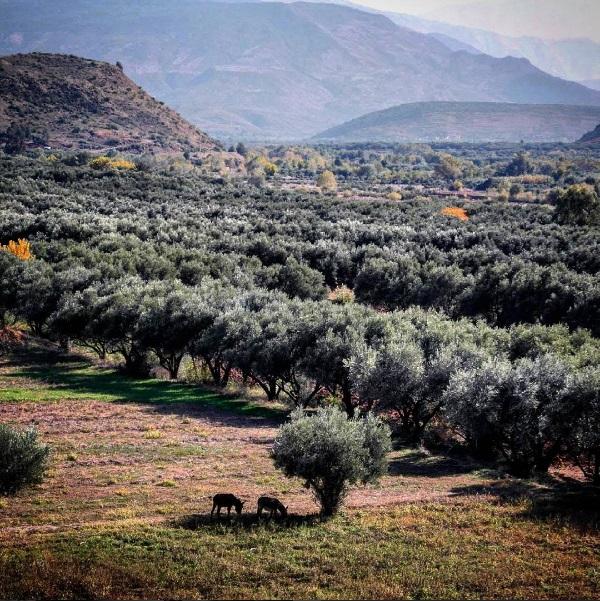 Les vallées berbères