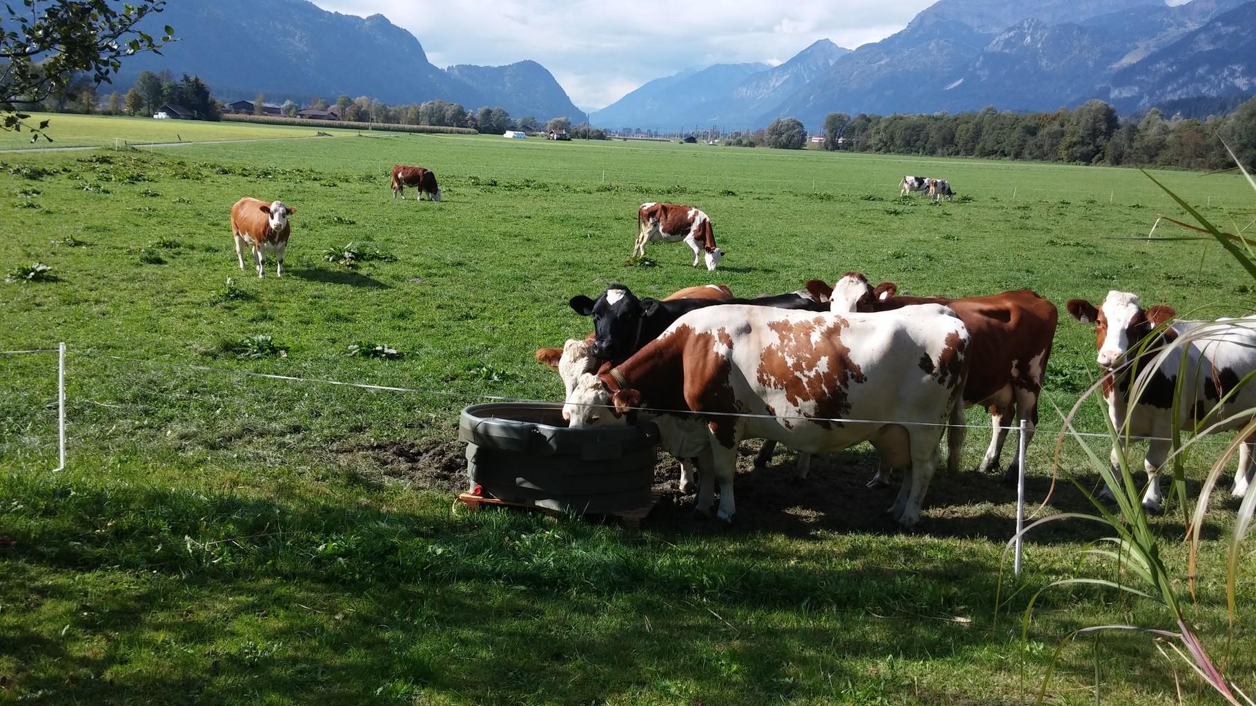eine nachhaltige Landwirtschaft neben den zahlreichen Industriebetrieben